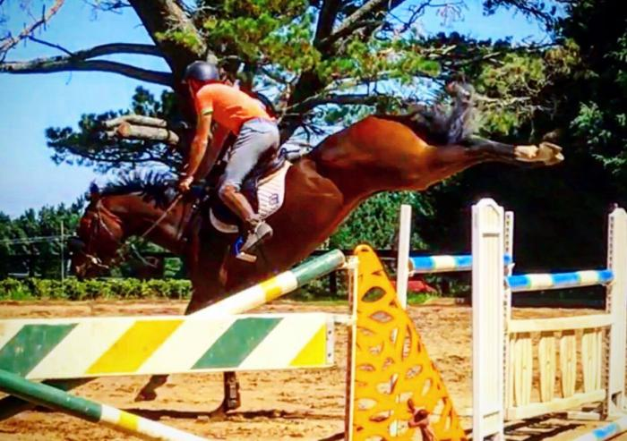 Serious Quality Showjumper