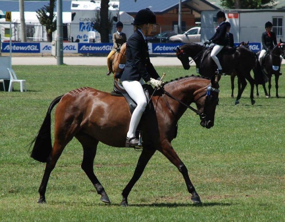 Pony Dressage Star