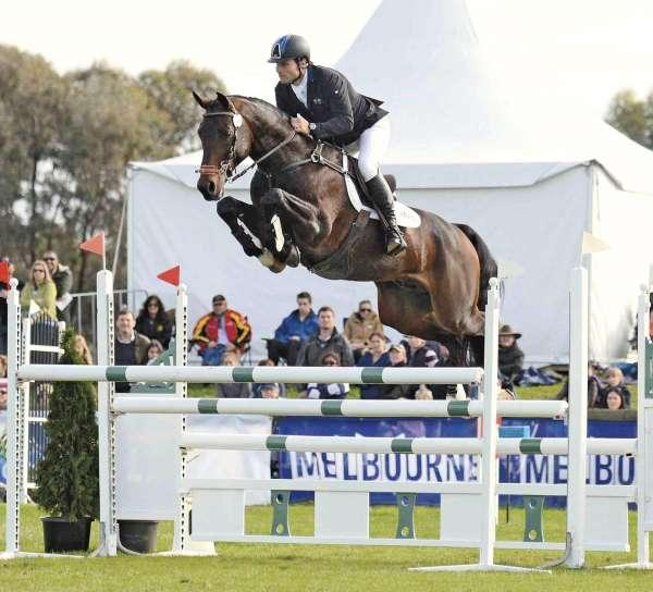 Eventing Stallion Service Fee for sale