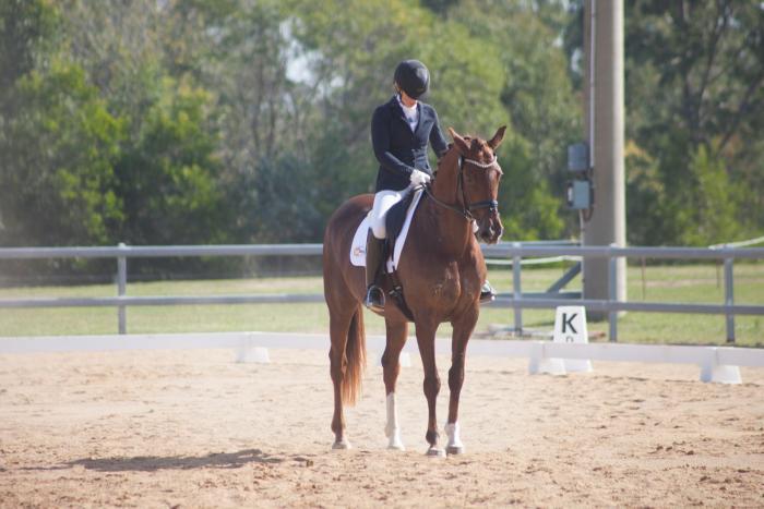 Medium fancy mare