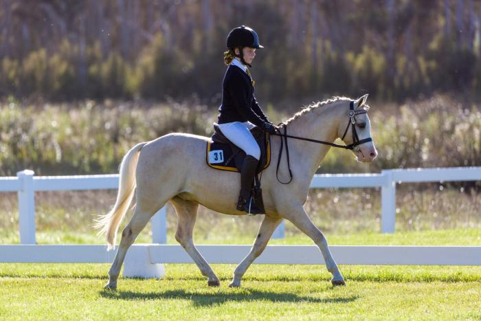 Outstanding Dressage & Performance Pony
