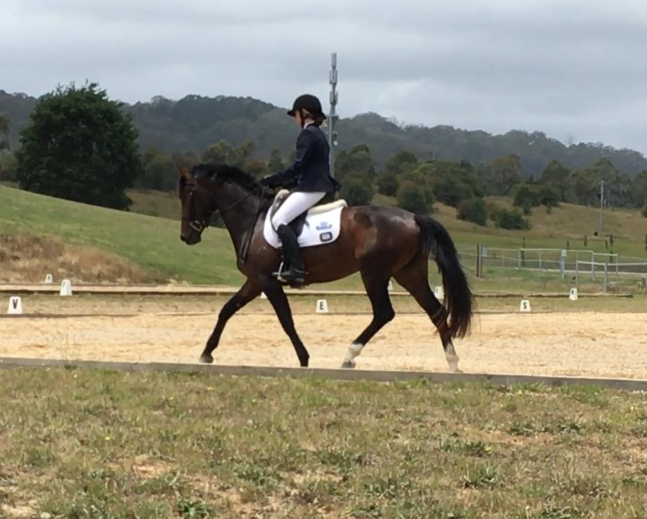 Talented Young Dressage Mare