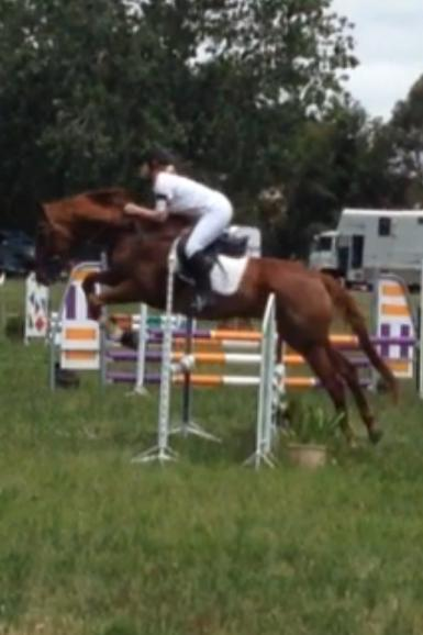 Pony Club Horses for Sale in Maryland - Equine Now