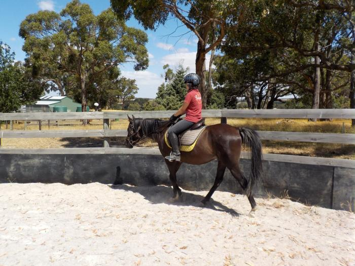 Black Arabian Gelding