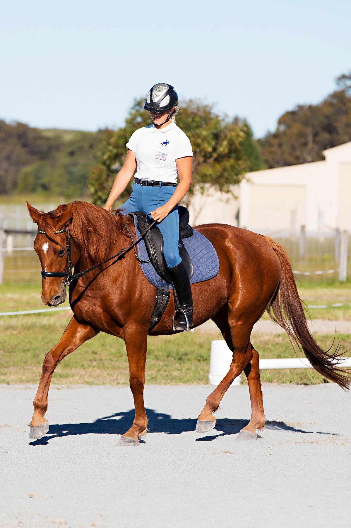Beautiful chestnut mare