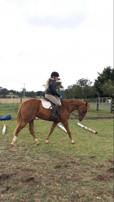 Gorgeous 3 year old 14.2h QH filly.
