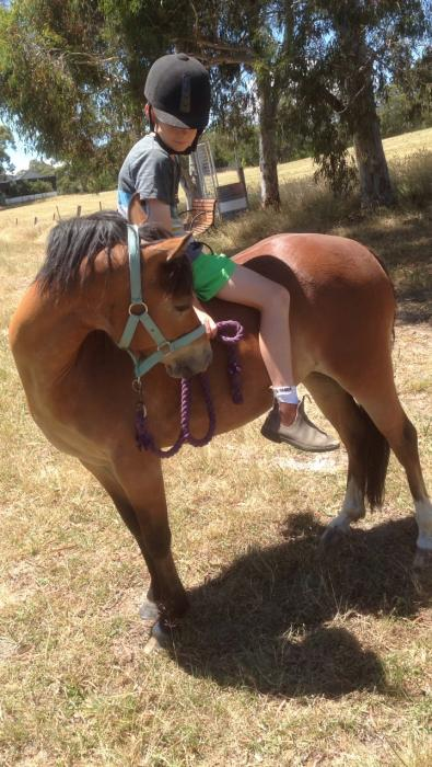 URGENT SALE!!! Performance Pony