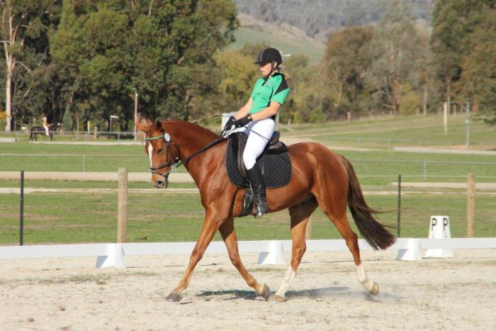 Talented Young Experienced Horse