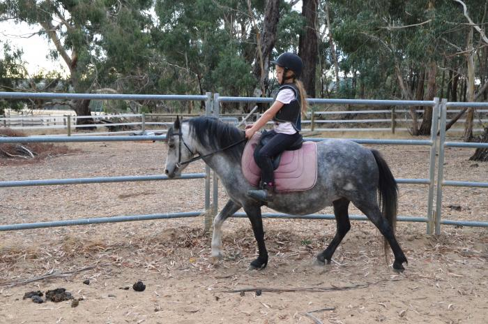 Cute and quiet 5yo mare