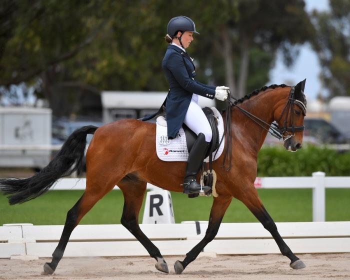 Ideal inter-schools mount - Adv level small horse