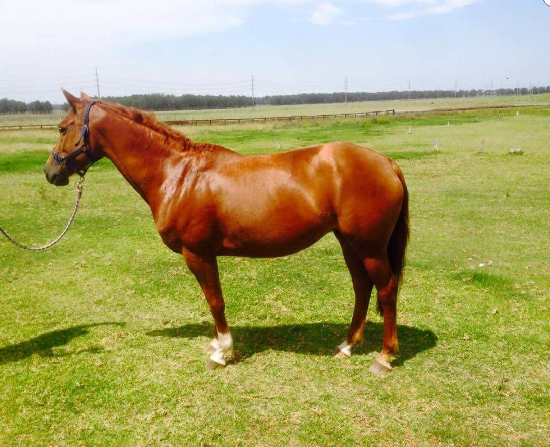 Stunning performance mare