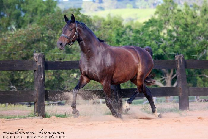 Exceptional Broodmare Proven Producer