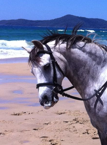 Outstanding Pony