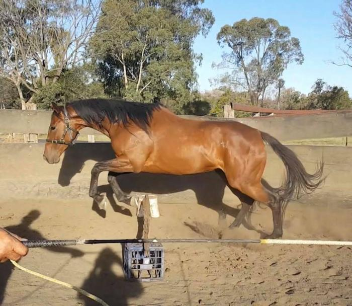 Project OTT mare $1000 ono must rehome ASAP