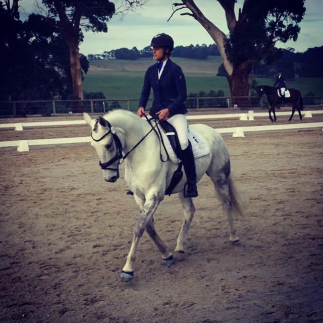 WB x Stock Horse Mare