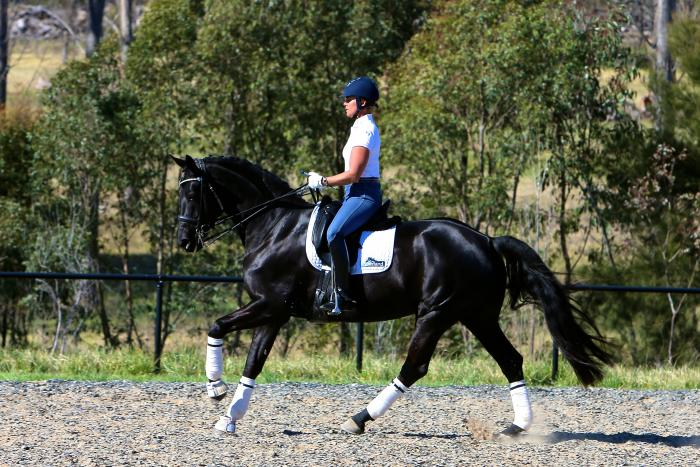 SENSATIONAL IMPORTED BLACK FEI MARE