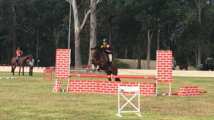 Interschool/Pony club Schoolmaster