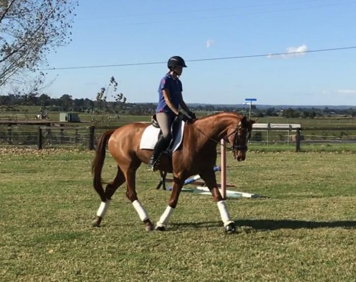 Serious dressage/show potential - lovely young WBx