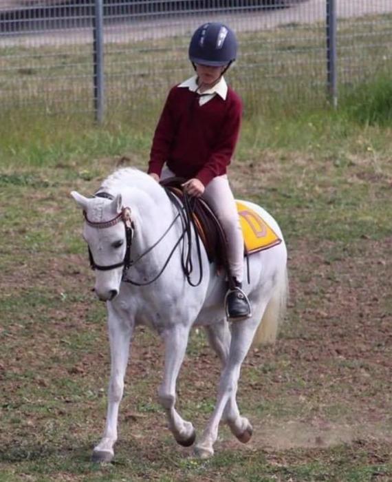 Super fun kids pony