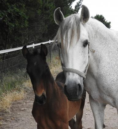 Dam - Kenia-FC with her latest foal