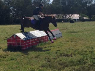 Magnificent All Round Riding Pony Mare