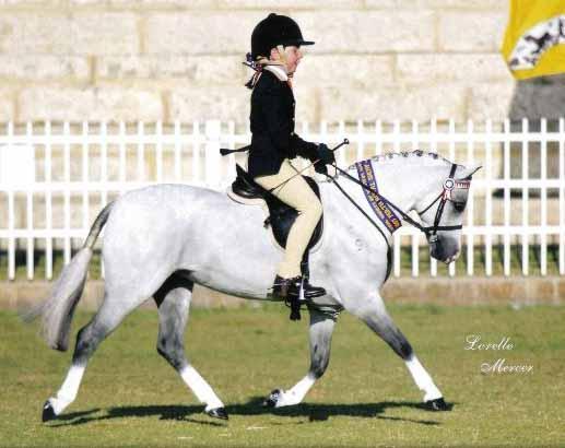 Mothers Dream Schoolmaster pony