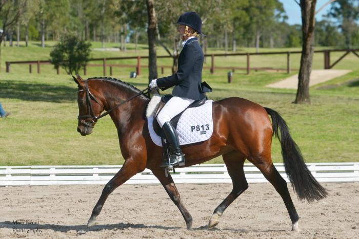 Show/Dressage/Breed