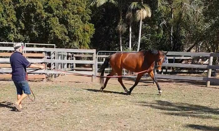 *REDUCED* 3 yr old filly/ 2 Grand Prix sires