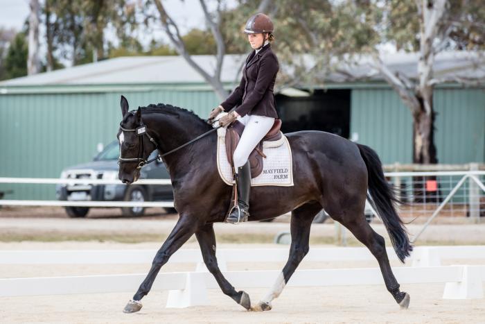 Talented black 5yo mare