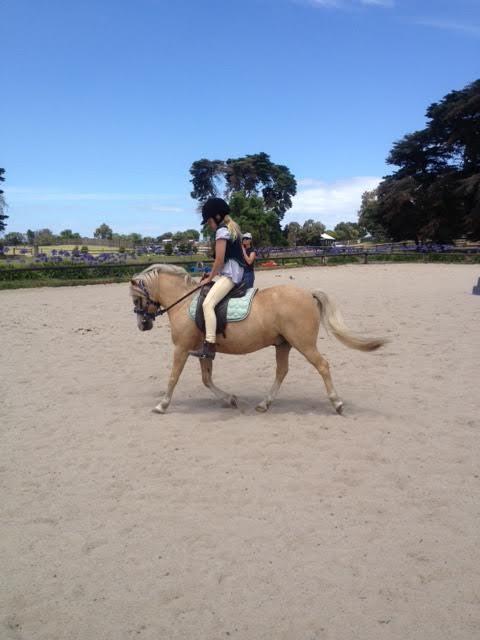 Gorgeous part-Welsh palomino pony