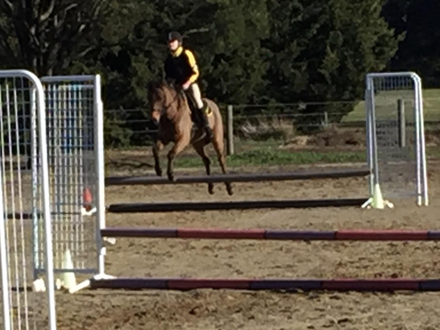 Riding pony for sale