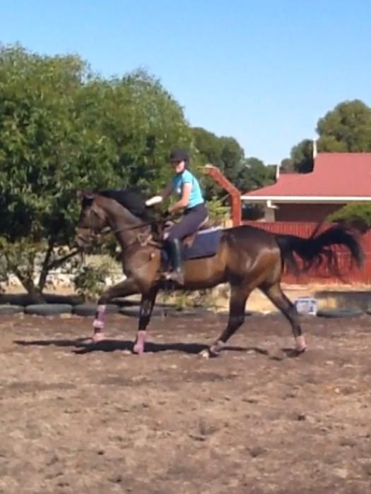 Attractive Big OTTB
