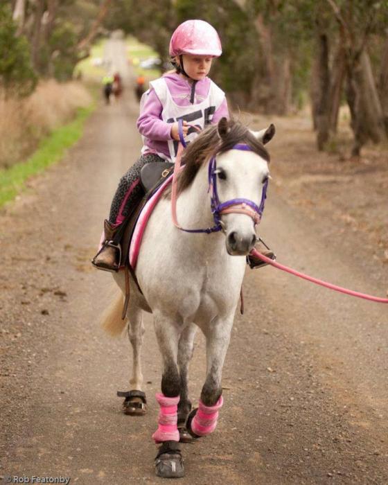 NAWARRAH PARK CARTMAN - Mothers Dream Pony