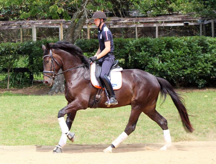 Outstanding Dressage 3yr old out of Imported Mare