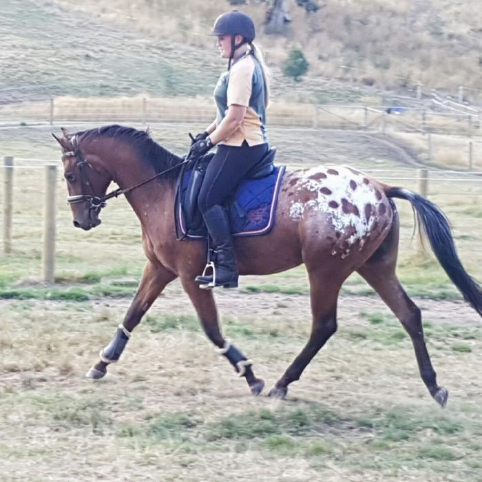 ** LOVELY QUIET YOUNG APPALOOSA GELDING **