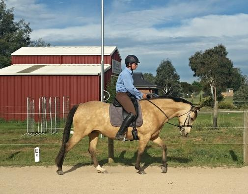 """Docs Rocking Emblem"" Quality Quarter horse mare"