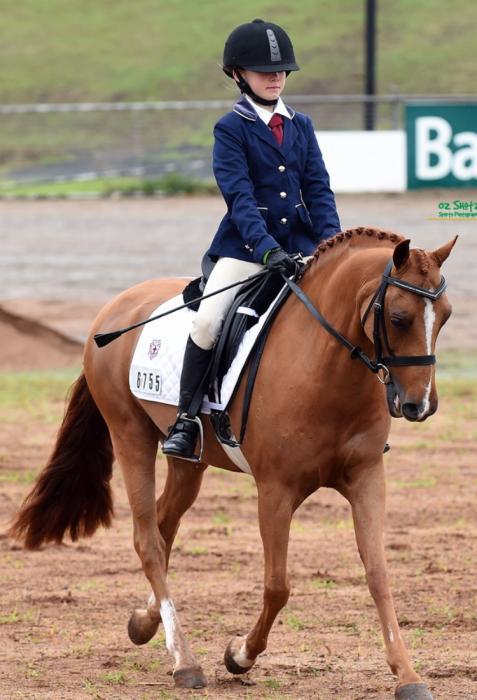 Amazing pony - 12.3hh Chestnut Welsh Gelding