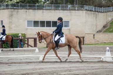 NSW Pony Dressage Champs 2013