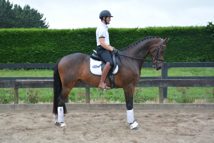 Extremely talented dressage prospect
