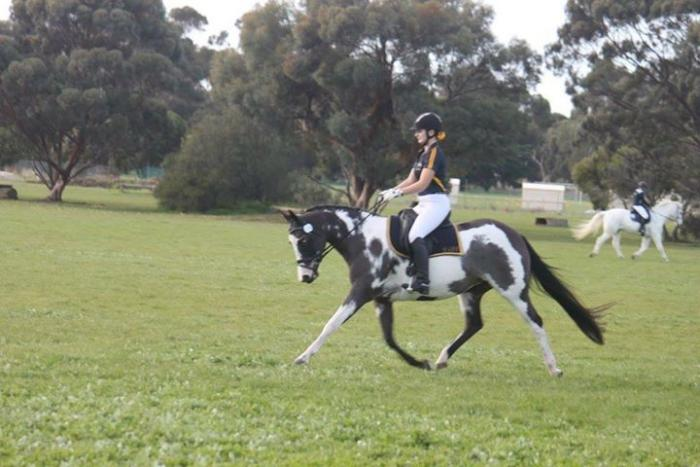 Stunning Dressage or Show Mare