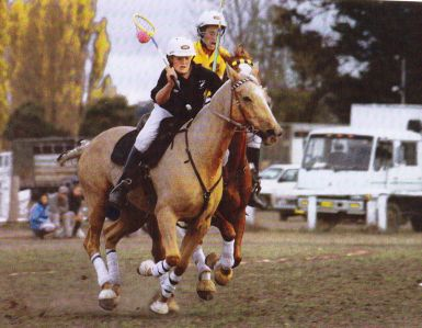 Louie's granddam was a great polocrosse horse and allrounder