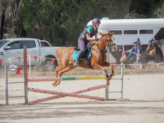 Talented Showjumping Pony