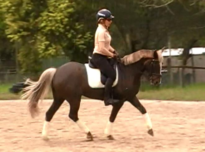 Seren- Sweet educated dressage pony