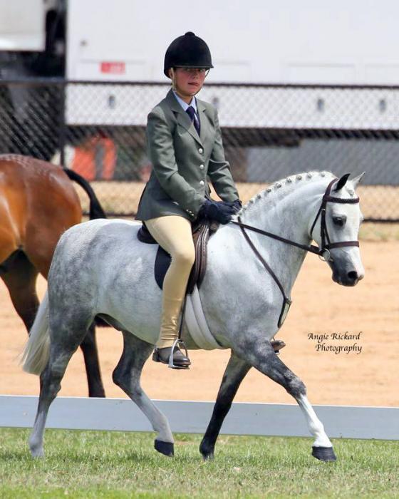 """True Child's Small Hunter Pony"""