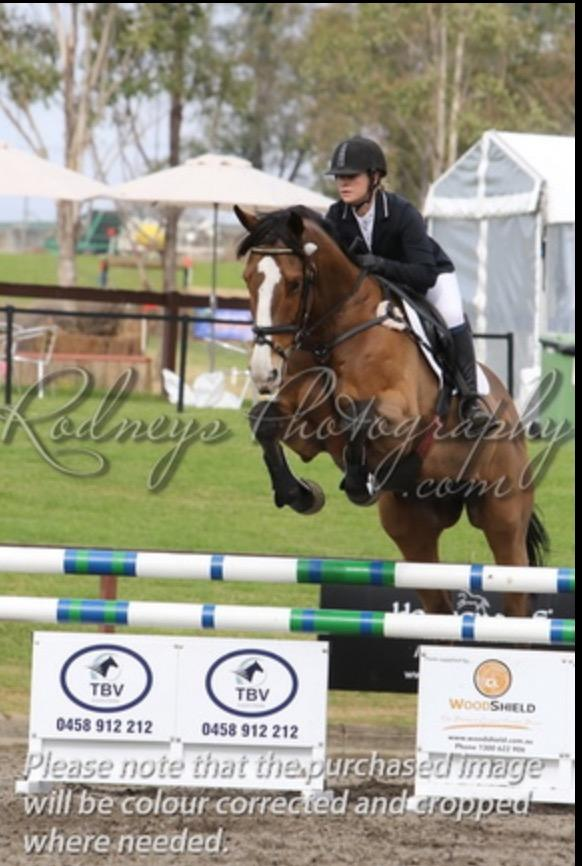 Competitive Eventer or Showjumper