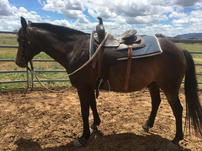 Cutting Saddle - BIG price reduction