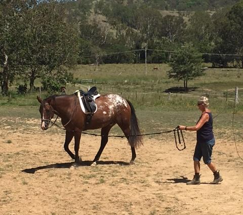 4yo Appaloosa with huge potential
