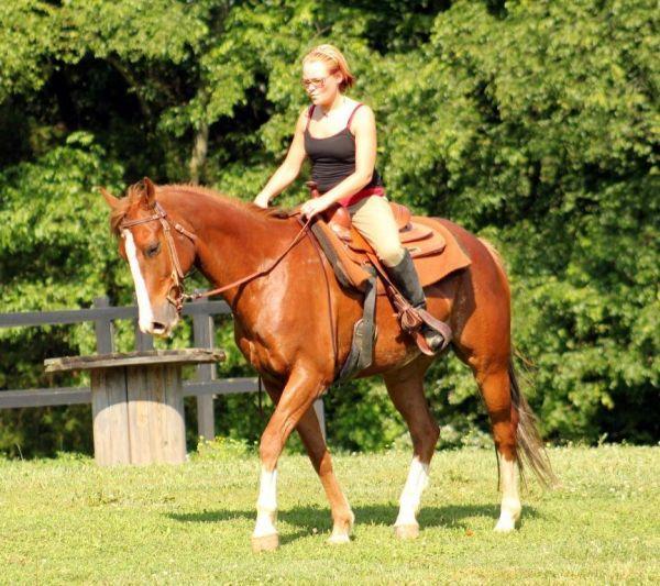 Quarter horses for sale