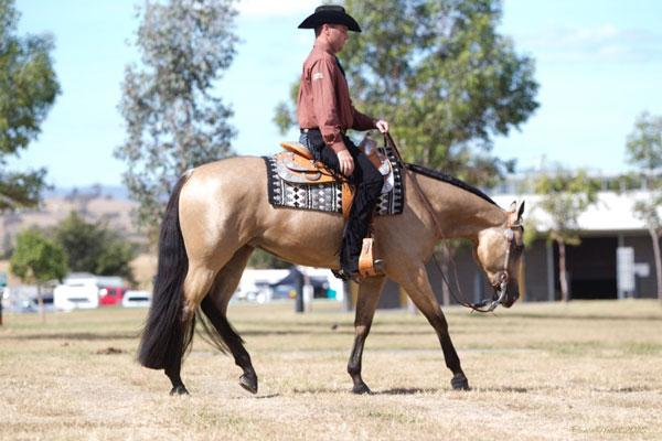 3yo Professionally Trained Western Pleasure Mare