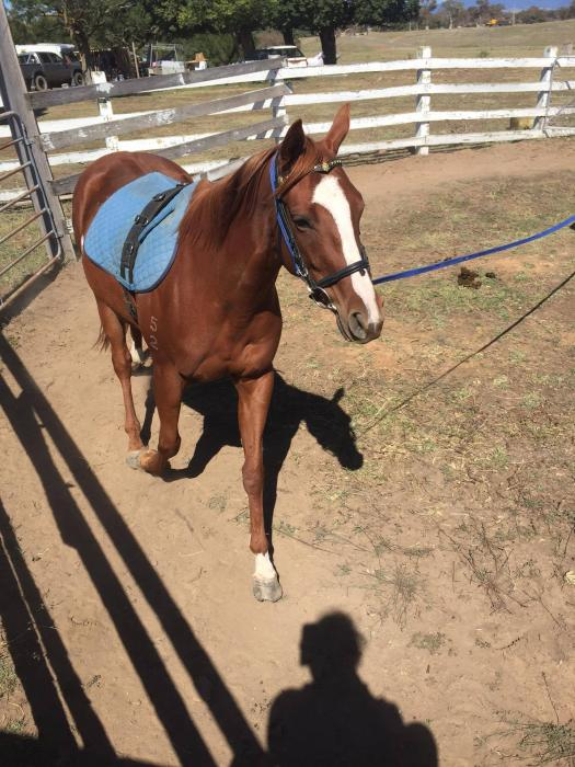 Quiet Project Thoroughbred Filly